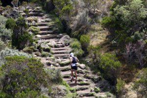 Actus trail